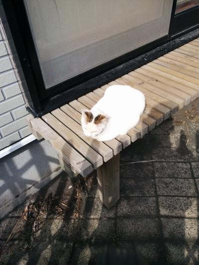 Shiro_img_20171116_120459